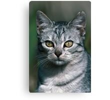 """Chat - Cat """" Peluche """" 02 (c)(h) ) by Olao-Olavia / Okaio Créations 300mm f.2.8 canon eos 5 1989  Canvas Print"""