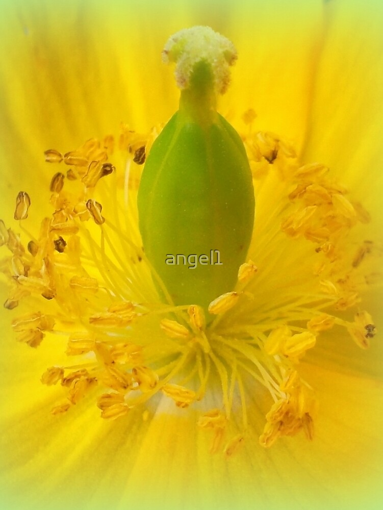 Yellow Celandine Poppy Closeup by ©The Creative  Minds