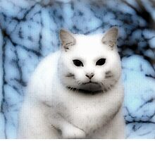 The White Cat by Forfarlass