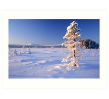 Snow covered trees in north Sweden Art Print