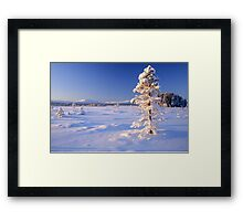 Snow covered trees in north Sweden Framed Print