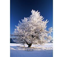 Frozen tree Photographic Print