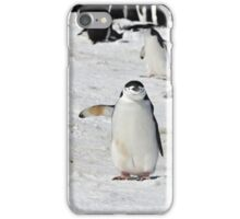 "Chinstrap Penguin  ~  ""Traffic Cop on Point Duty"" iPhone Case/Skin"