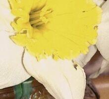 Daffodil In A Moonshine Jar Sticker