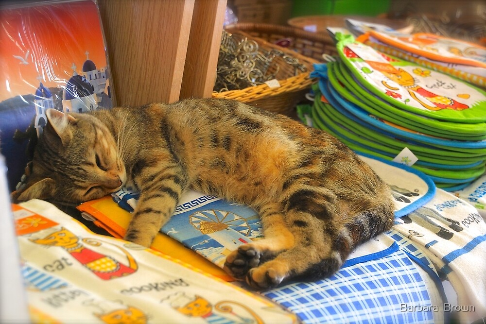 Cat in the Shop by Barbara  Brown