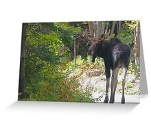 Maine Moose bull Greeting Card