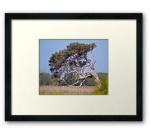 Windblown tree, Victoria, Australia Framed Print