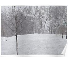Snow landscape trees Poster