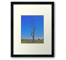 starling tree, Tasmania, Australia. Framed Print