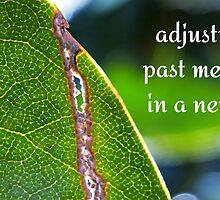 torn leaf by gatheringwonder