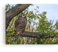 Owl on the Lookout Canvas Print