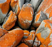Bay of Fires Boulders by Harry Oldmeadow