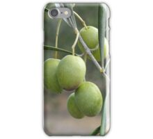 An Olive Branch iPhone Case/Skin