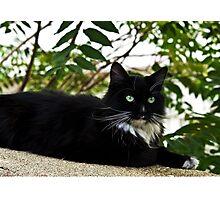 Tuxedo Cat Of Jerome Arizona Photographic Print