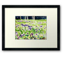 Crocus Field Framed Print