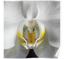 Centre of White Orchid Poster