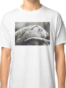 Southeastern Girdled Lizard Classic T-Shirt