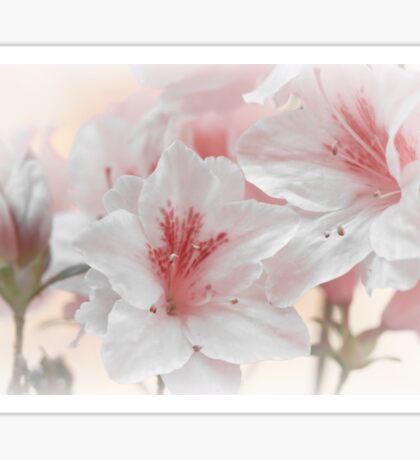 Romance - Pink Sticker