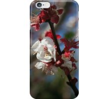 Sunlight Embracing Apricot Blossom iPhone Case/Skin
