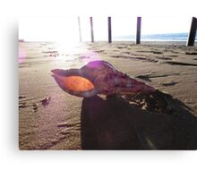 Conch shell sunset Canvas Print