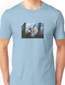 Close Up Apricot Blossom In Pastel Shades Unisex T-Shirt