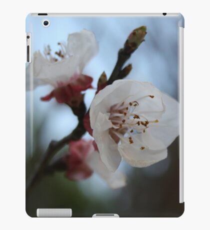 Close Up Apricot Blossom In Pastel Shades iPad Case/Skin