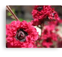 Pink Tree Flowers – Macro Close-Up Canvas Print