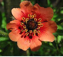 Orange Flower – Macro Close-Up by Kyapture