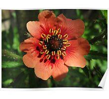 Orange Flower – Macro Close-Up Poster