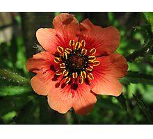 Orange Flower – Macro Close-Up Photographic Print