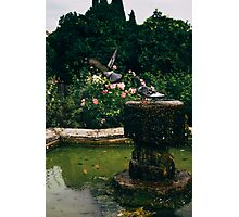 Pigeons and a Fountain Photographic Print