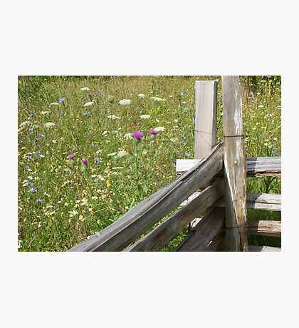 Fence & Field Photographic Print