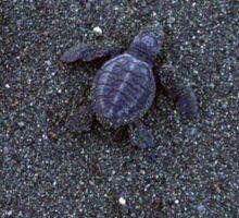 Hercules, Hatchling Sea Turtle Sticker