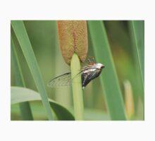 Cicada on a Cattail Plant Kids Tee