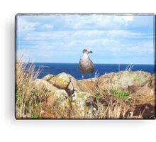 Seagull on the Rocks Canvas Print