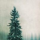 Solitary Tree by Priska Wettstein
