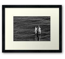 Single Old Piling Horizontal BW Framed Print