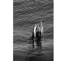 Single Old Piling Vertical 3 BW Photographic Print