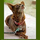 Johnny Canelo Praying - A dogs prayer by Larry3