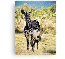Zebra in South Africa Canvas Print