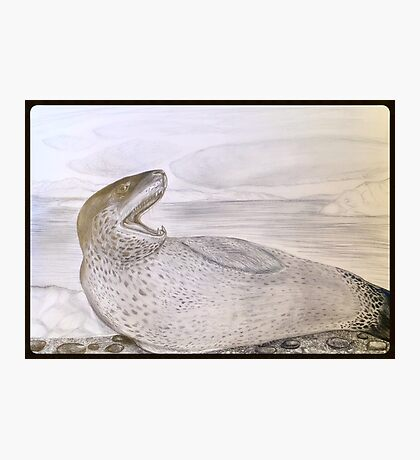 LEOPARD SEAL Photographic Print