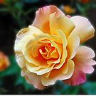 Only a rose - but what a rose! by kathrynsgallery