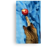Cat and the Apple Canvas Print