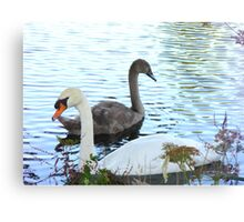 Swan and Cygnet on the River Canvas Print