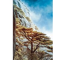 Welcoming Pine in the mist  Photographic Print