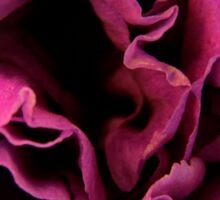 Purple Carnation Sticker