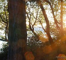 Sunset in the woods by Rainydayphotos