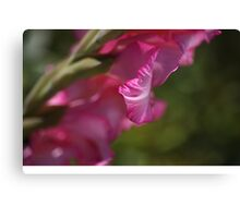 Pink Side Gladioli Canvas Print