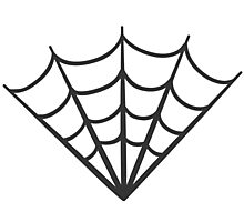 spider web (1) Photographic Print