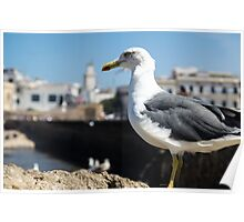 Seagull of Essaouira Poster